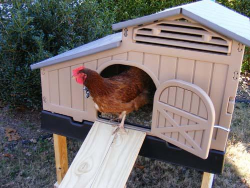 Snap Lock Standard Chicken Coop Formexstore Com